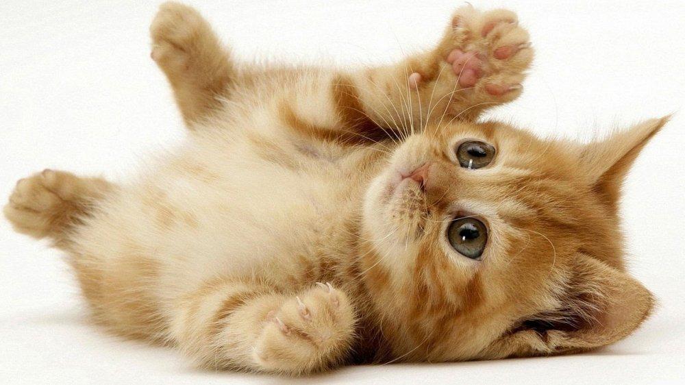Nằm mơ thấy mèo là điềm gì, đánh con gì?