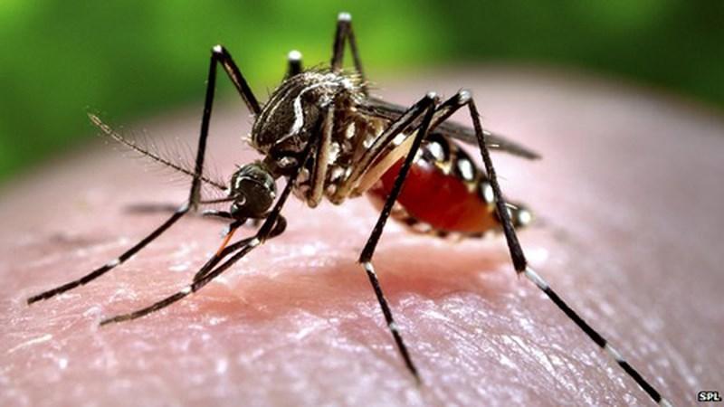 Chiêm bao mơ thấy con muỗi đánh con gì? Con số may mắn nhất