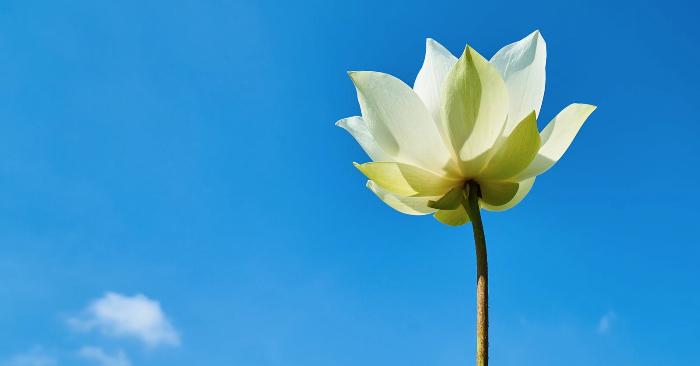 Mơ thấy trời xanh chiêm bao thấy trời xanh đánh con gì