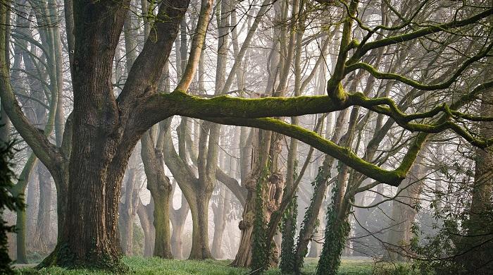 Những giấc mơ về gỗ mang thông điệp gì đặc biệt?
