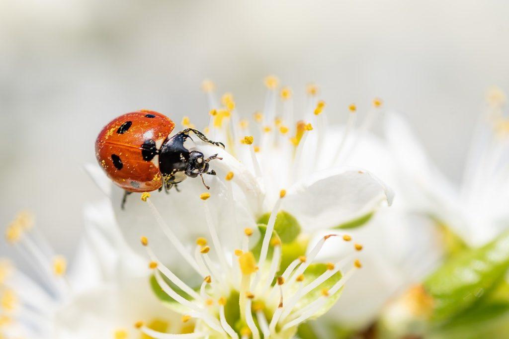 Mơ thấy bọ cánh cứng là điềm báo gì? Giải mã giấc mơ thấy bọ cánh cứng