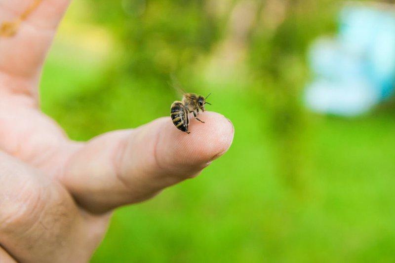 Mơ bị ong đốt đánh con gì? Giải mã giấc mơ thấy con ong
