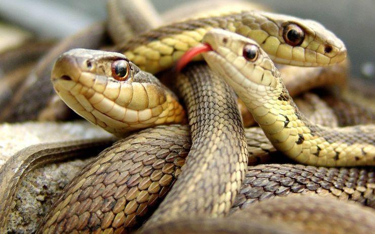 Giải mã giấc mơ thấy con rắn là điềm báo gì? Thông điệp từ giấc mơ
