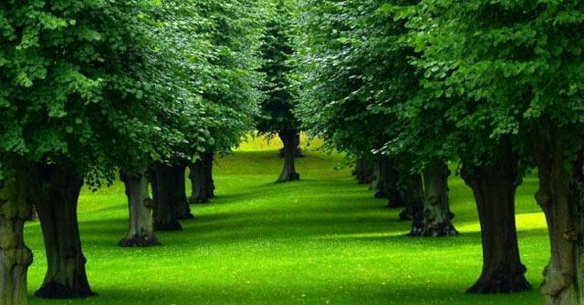Nằm mơ thấy cây cối điềm báo gì, lành hay dữ? Là số mấy?