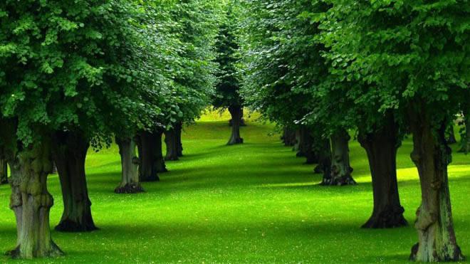 Mơ thấy cây cối đánh số mấy, có điềm báo như thế nào?